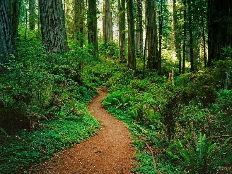 Bosque con camino