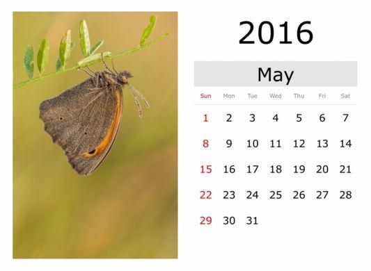 Calendarios de mayo 2016 con mariposas