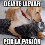 Dejate llevar por la pasion
