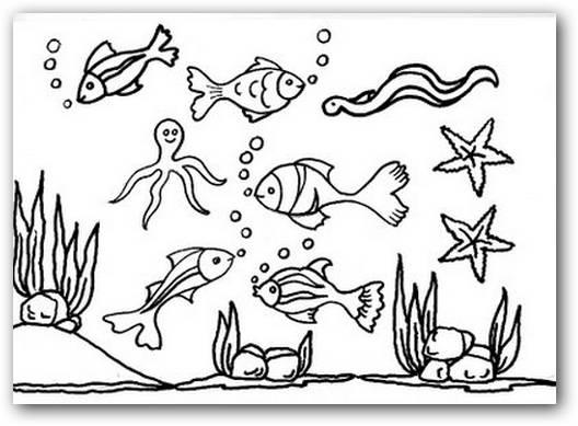Dibujos para colorear animales del fondo del mar