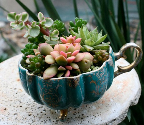 Fotos de mini jardines
