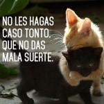 Frases sobre gatos