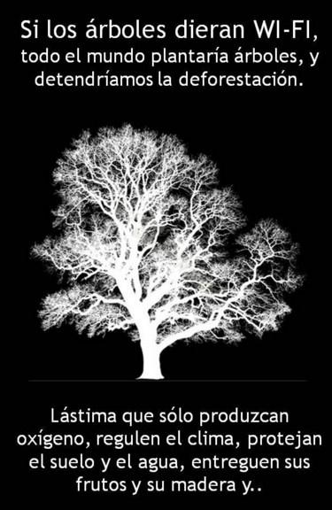 Frases sobre plantar un arbol