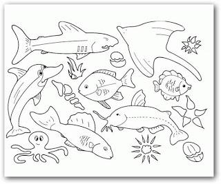 Imagenes de animales del mar