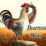Imagenes de buenos dias con un gallo cantando