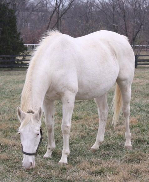 Imagenes de caballos albinos comiendo