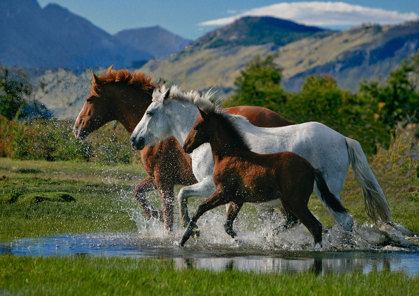 Imagenes de caballos reales