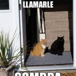 Imagenes de chistes de gatos