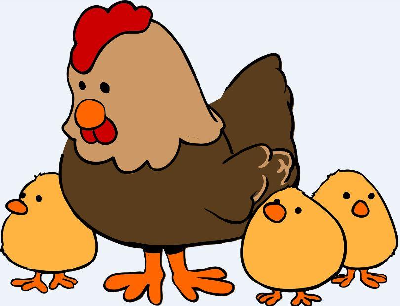 Imagenes de gallinas con pollitos