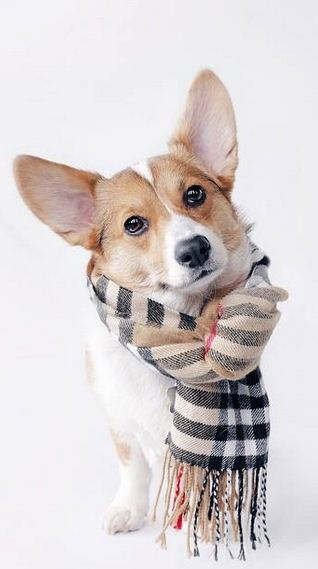 Imagenes de perros con bufanda