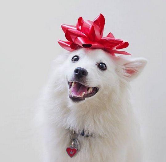 Imagenes de perros con moño