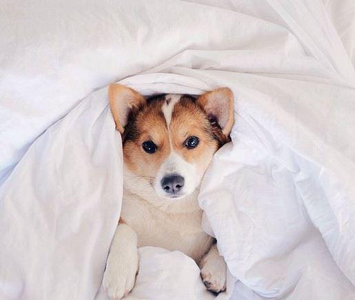Imagenes de perros muy tiernos para Facebook
