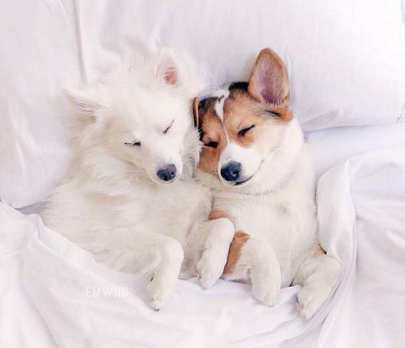 Imagenes de perros muy tiernos