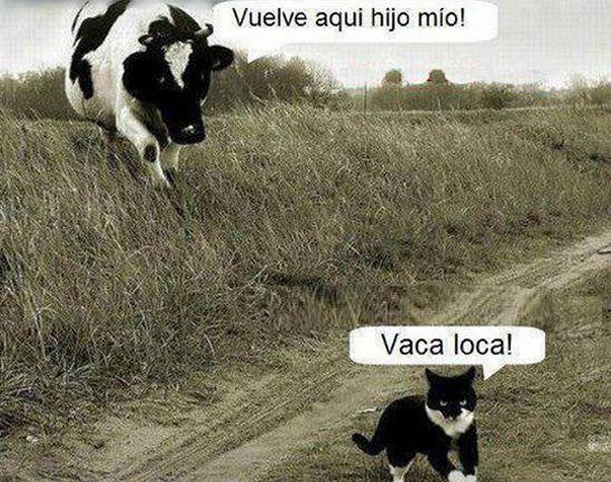 Imagenes de vacas divertidas