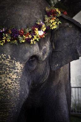 Imagenes del día mundial del elefante