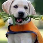 Imagenes feliz dia del perro