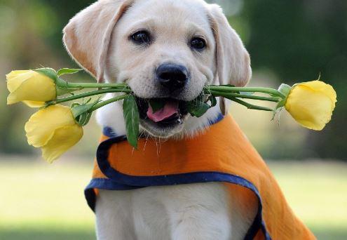 Imagenes dia del perro bonitas