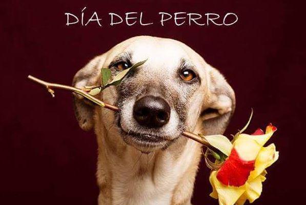 Imagenes feliz dia del perro para facebook