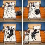 Imagenes graciosas de dormir con mascotas