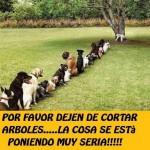 Imagenes graciosas de perros haciendo cola