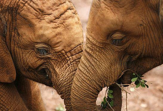 Imagenes para el día del elefante