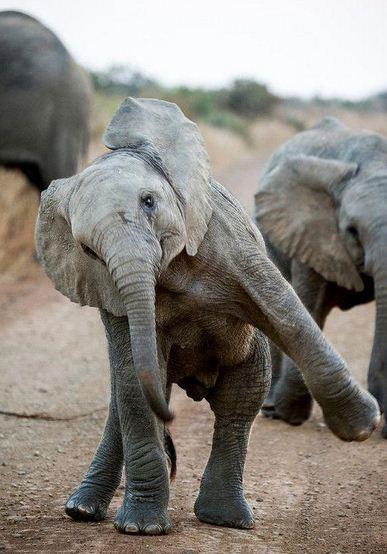Imagenes para el día mundial del elefante