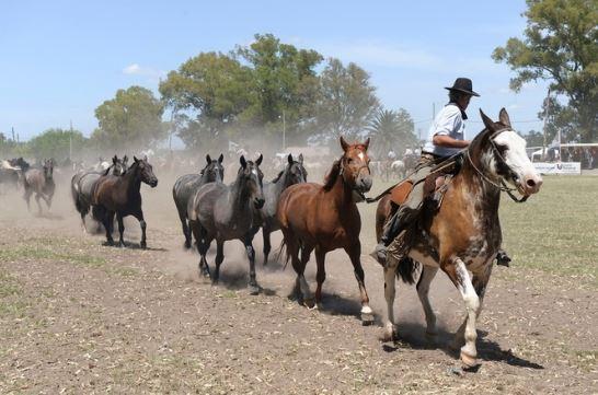 Imagenes para el dia nacional del gaucho