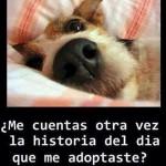 Imagenes sobre adoptar animales