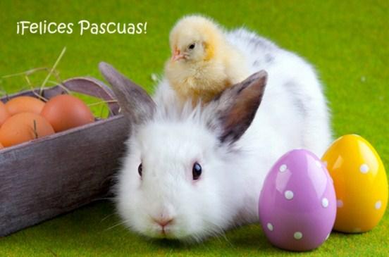 Imagenes tiernas con mensajes de Pascua
