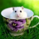 Imagenes tiernas de hamsters