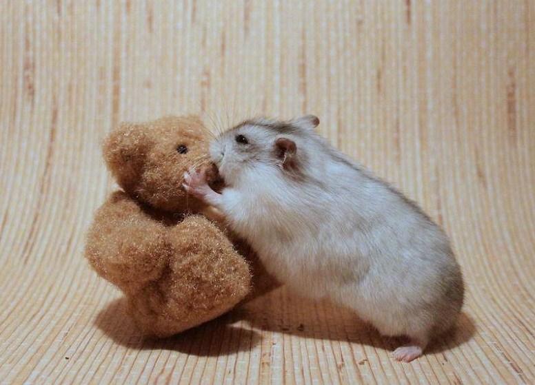 Imagenes tiernas de hamsters dando besos