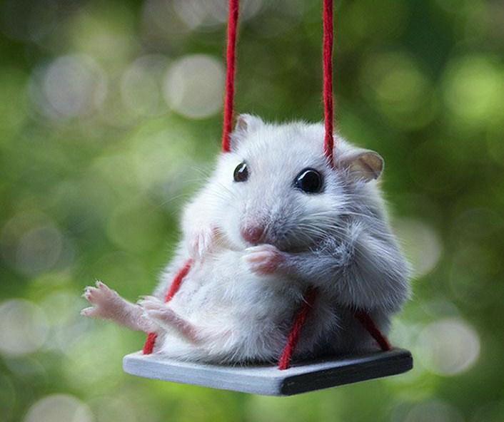 Imagenes tiernas de hamsters en columpios