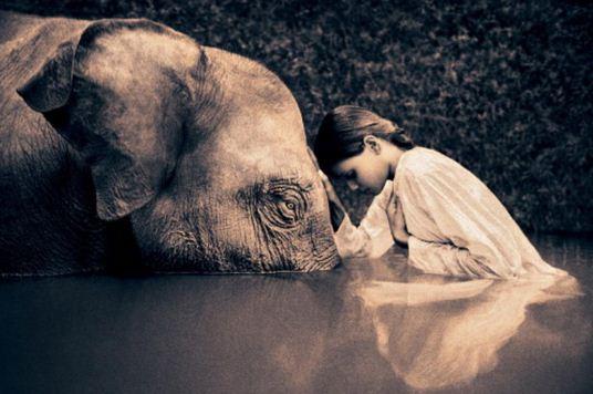 Imagenes tiernas para el día mundial del elefante