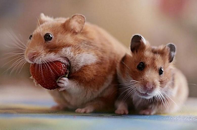 Imagenes tiernas y divertidas de hamsters