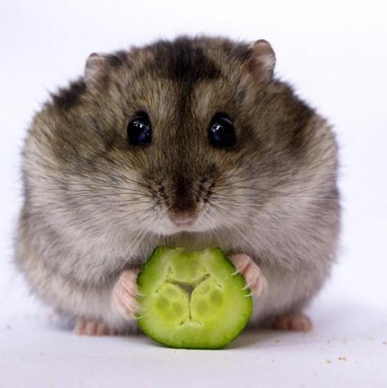 Imagenes tiernas y dulces de hamsters