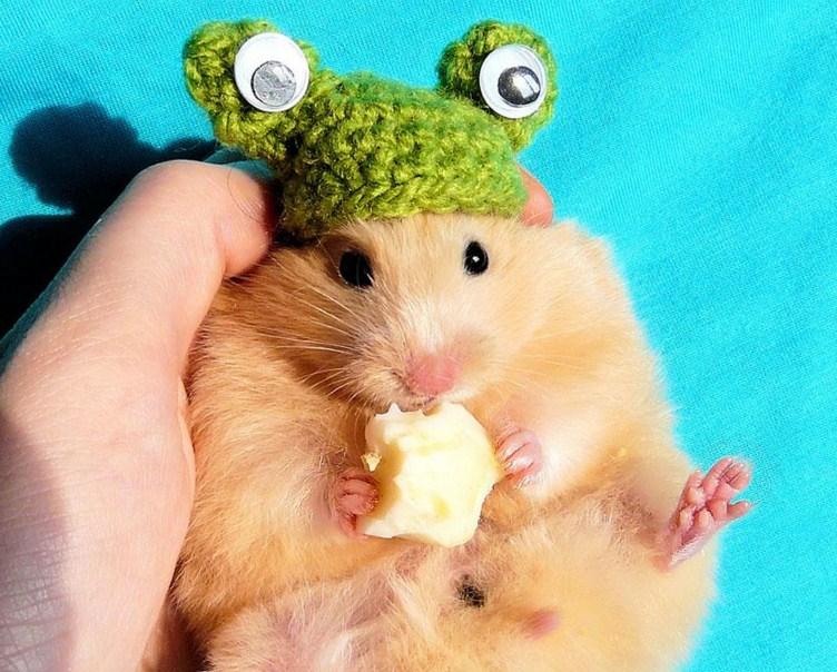 Imagenes tiernas y graciosas de hamsters