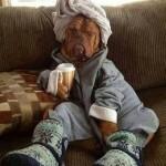 Perros en pijamas