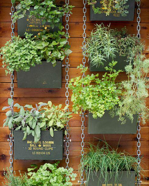 Plantas para jardines verticales caseros