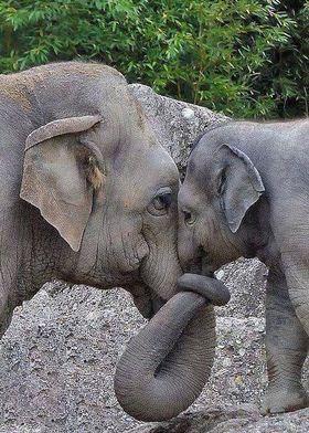 Postal de elefantes tierna