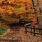 Postales de caminos en el bosque