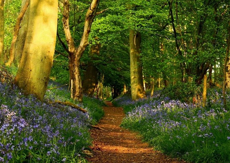 Postales de caminos en el bosque con flores