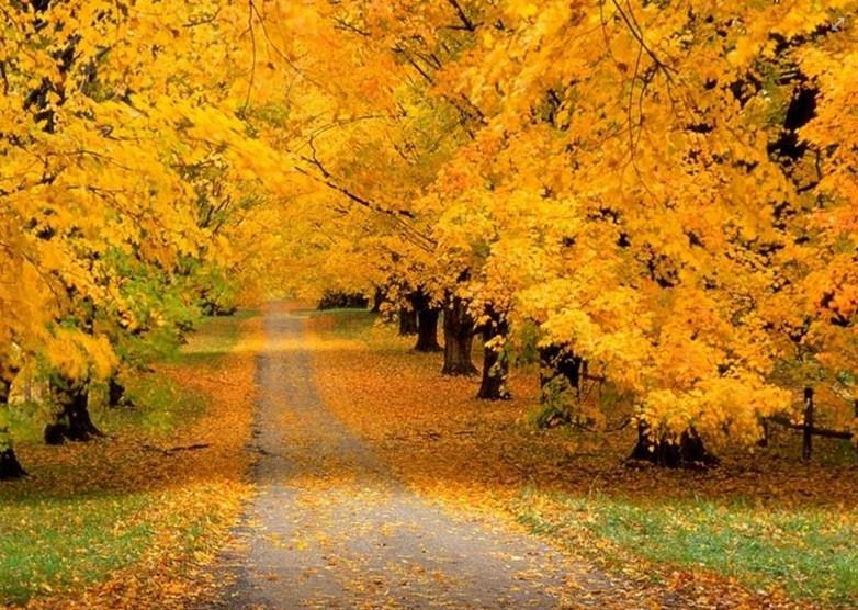 Postales de caminos en otoño