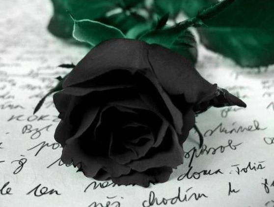 Rosas de luto