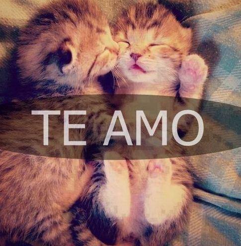 Te amo con gatitos