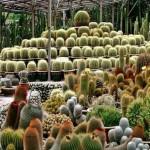Imagenes de cactus y suculentas