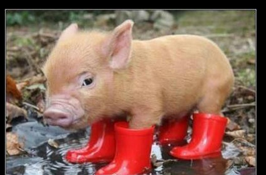 fotos de lluvia con chistes
