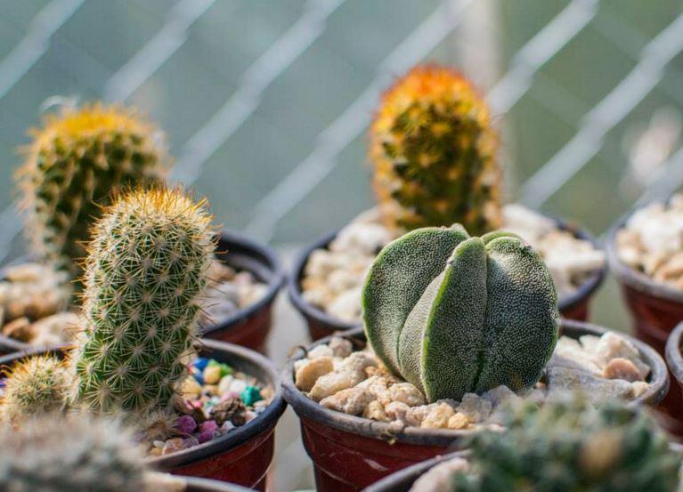 fotos y nombres de cactus y suculentas