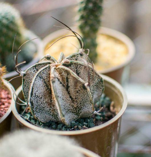 todo sobre cactus y suculentas